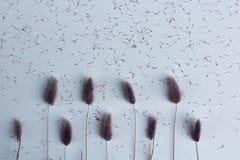 与种子的干花淡紫色,紫色和桃红色lagurus在白色桌面 在白色背景的顶视图墙纸 免版税库存照片