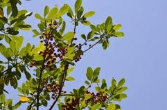 与种子的绿色树 库存照片
