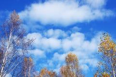 与积云的秋天风景在桦树上 库存照片