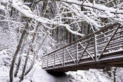 与积雪的分支的冬天风景被编织入精美 图库摄影
