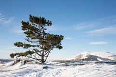 与积雪的山的美好的横向, 免版税图库摄影