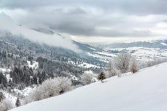 与积雪的树的冬天对角风景 免版税库存照片