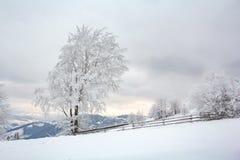 与积雪的树的冬天风景 库存图片