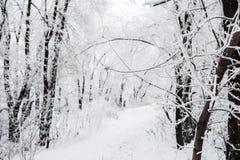 与积雪的树的冬天风景 图库摄影