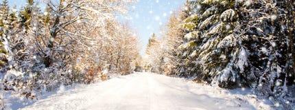 与积雪的树的圣诞节背景 免版税图库摄影