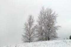 与积雪的树的美好的冬天风景 库存照片