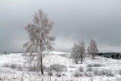 与积雪的树的美好的冬天风景 免版税库存图片