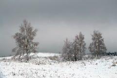 与积雪的树的美好的冬天风景 免版税图库摄影