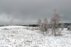 与积雪的树的美好的冬天风景 免版税库存照片