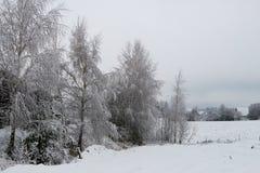 与积雪的树的美好的冬天风景 图库摄影