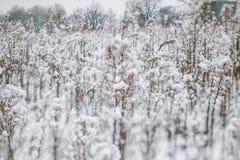 与积雪的植物和树的冬天风景 小景深提高的作用 阿尔卑斯包括房子场面小的雪瑞士冬天森林 冻结的花 库存图片