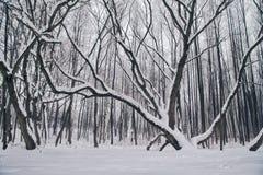 与积雪的结构树的冬天横向 图库摄影