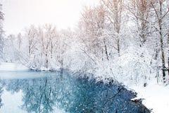 与积雪的结构树的美好的冬天横向 新年好 快活的圣诞节 免版税库存图片