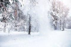 与积雪的结构树的美好的冬天横向 新年好 快活的圣诞节 免版税图库摄影
