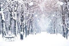 与积雪的结构树的美好的冬天横向 新年好 快活的圣诞节 库存图片