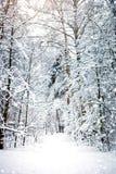 与积雪的结构树的美好的冬天横向 新年好 快活的圣诞节 图库摄影