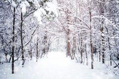 与积雪的结构树的美好的冬天横向 新年好 快活的圣诞节 库存照片