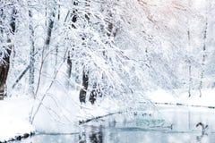 与积雪的结构树的美好的冬天横向 新年好 快活的圣诞节 免版税库存照片