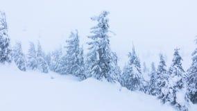 与积雪的结构树的美好的冬天横向 高加索佐治亚gudauri山冬天 股票视频