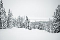 与积雪的结构树的黑暗的冬天横向 免版税库存图片