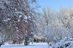 与积雪的结构树的冬天横向 免版税库存照片
