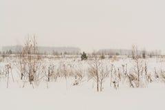 与积雪的结构树的冬天横向 免版税图库摄影