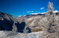 与积雪的结构树的美好的冬天横向 俄国 二者择一地 chulyshman河 免版税库存照片