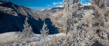 与积雪的结构树的美好的冬天横向 俄国 二者择一地 chulyshman河 库存照片