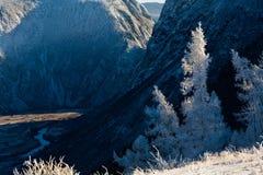 与积雪的结构树的美好的冬天横向 俄国 二者择一地 chulyshman河 免版税库存图片