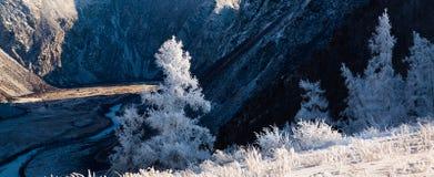与积雪的结构树的美好的冬天横向 俄国 二者择一地 chulyshman河 免版税图库摄影