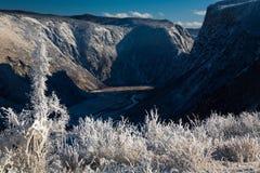 与积雪的结构树的美好的冬天横向 俄国 二者择一地 chulyshman河 图库摄影