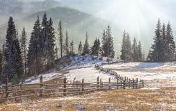 与积雪的结构树的美好的冬天横向 库存照片
