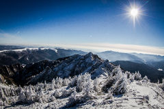 与积雪的结构树的美好的冬天横向 免版税库存照片