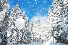 与积雪的结构树的美好的冬天横向 免版税库存图片
