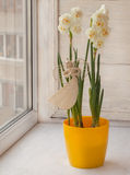 与秸杆天使的白色双重黄水仙 图库摄影