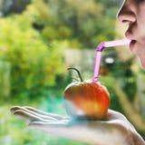 与秸杆的红色蕃茄 免版税库存图片