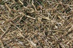 与秸杆的绿色塑料侵蚀网在纹理背景下 图库摄影