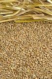 与秸杆的麦子 免版税库存照片