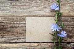 与空插件的苦苣生茯背景和花在老求爱 免版税图库摄影