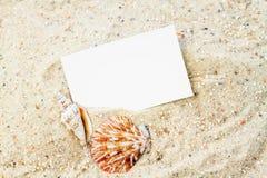 与空插件的贝壳 免版税库存图片
