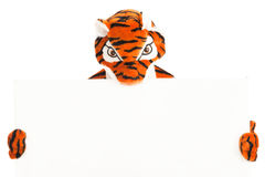 与空白的标志的老虎 免版税库存图片