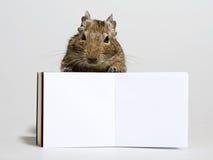 与空白的海报的滑稽的仓鼠在爪子 免版税库存照片