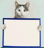 与空白的空的白皮书的猫举行蓝色框架 库存照片