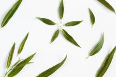 与空白的花卉背景文本的,平的位置 库存图片
