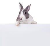 与空白纸的兔子在白色背景 免版税库存图片