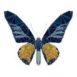 与空白线路,多低动物的多角形蝴蝶,多角形 免版税库存照片
