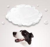 与空的云彩的逗人喜爱的博德牧羊犬 库存图片