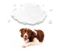与空的云彩的逗人喜爱的博德牧羊犬 图库摄影