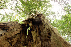 与空的桶的高大的树木 免版税库存照片