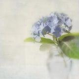 与空间的八仙花属看板卡文本的。 免版税图库摄影